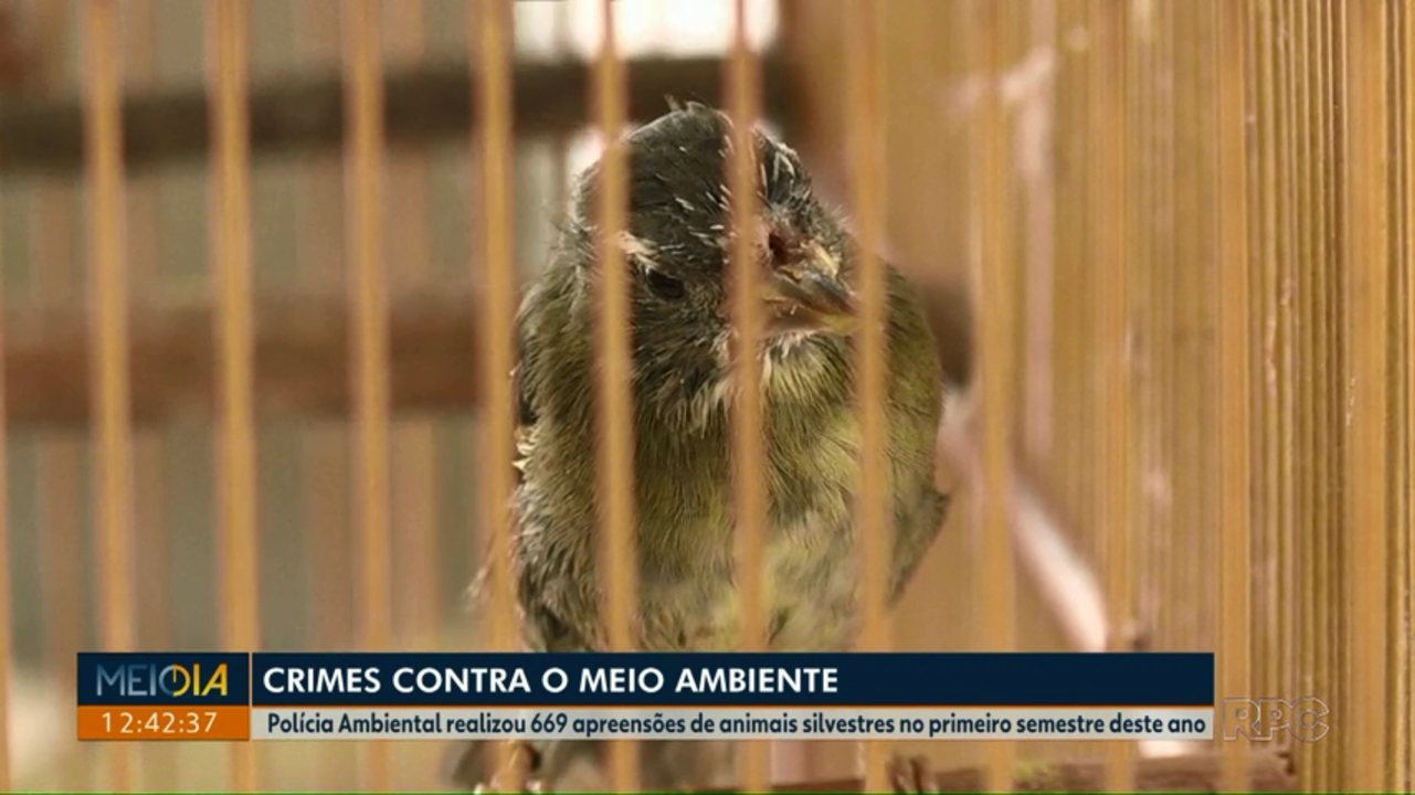 Polícia Ambiental realizou 669 apreensões de animais silvestres no 1° semestre deste ano